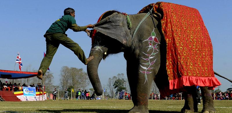 Elephant_Festival_pinkcityroyals02
