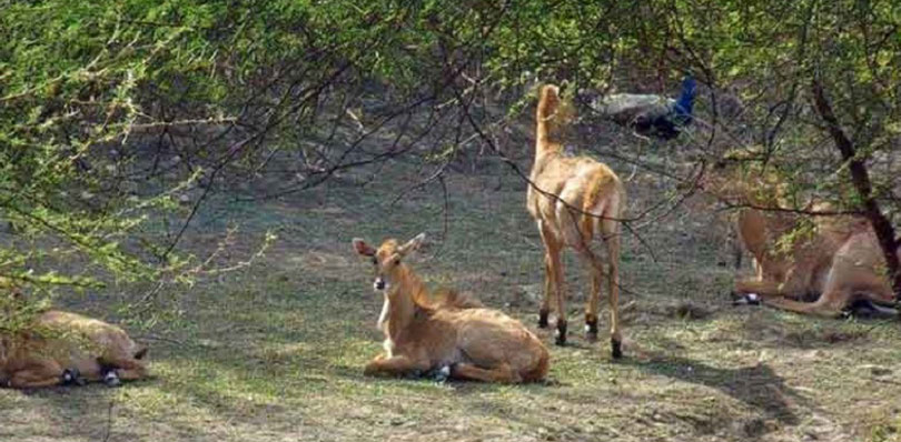 pinkcityroyals_Nahargarh-Biological-3.jpg